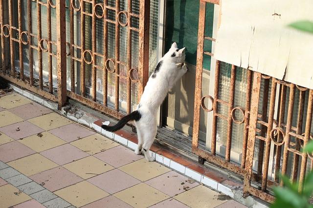 家の中を覗き込む猫