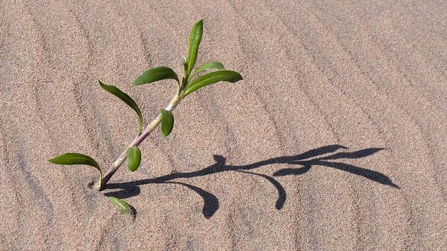 砂漠に生えた植物