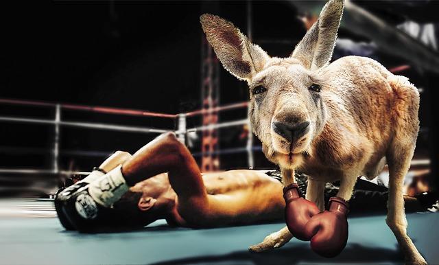 ボクシングで戦う人とカンガルー