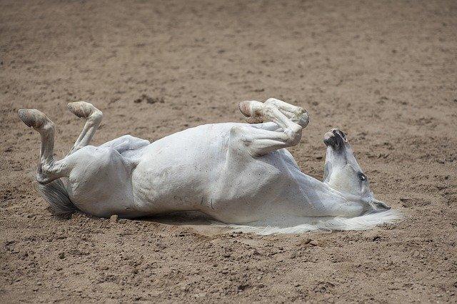 地面に倒れ込む白馬