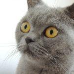 目を見開いている猫